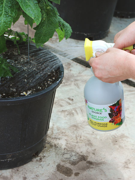 Natures-Source-Fertilizer-hose-end-sprayer-watering-tomato-minimato-450x600.jpg