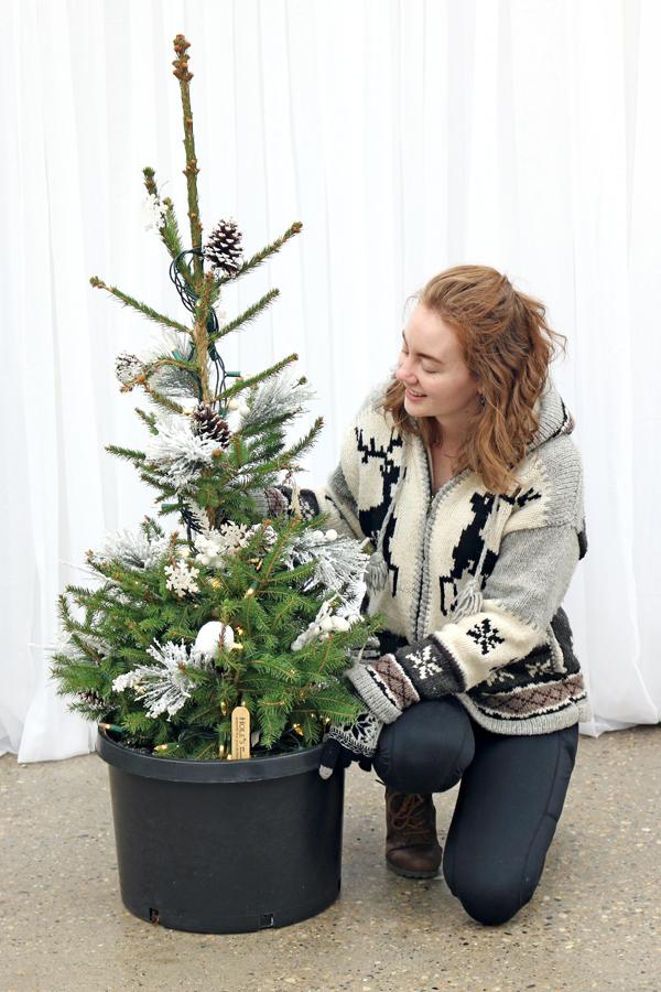 2018-String-Light-up-Winter-Planter_E-600x900.jpg