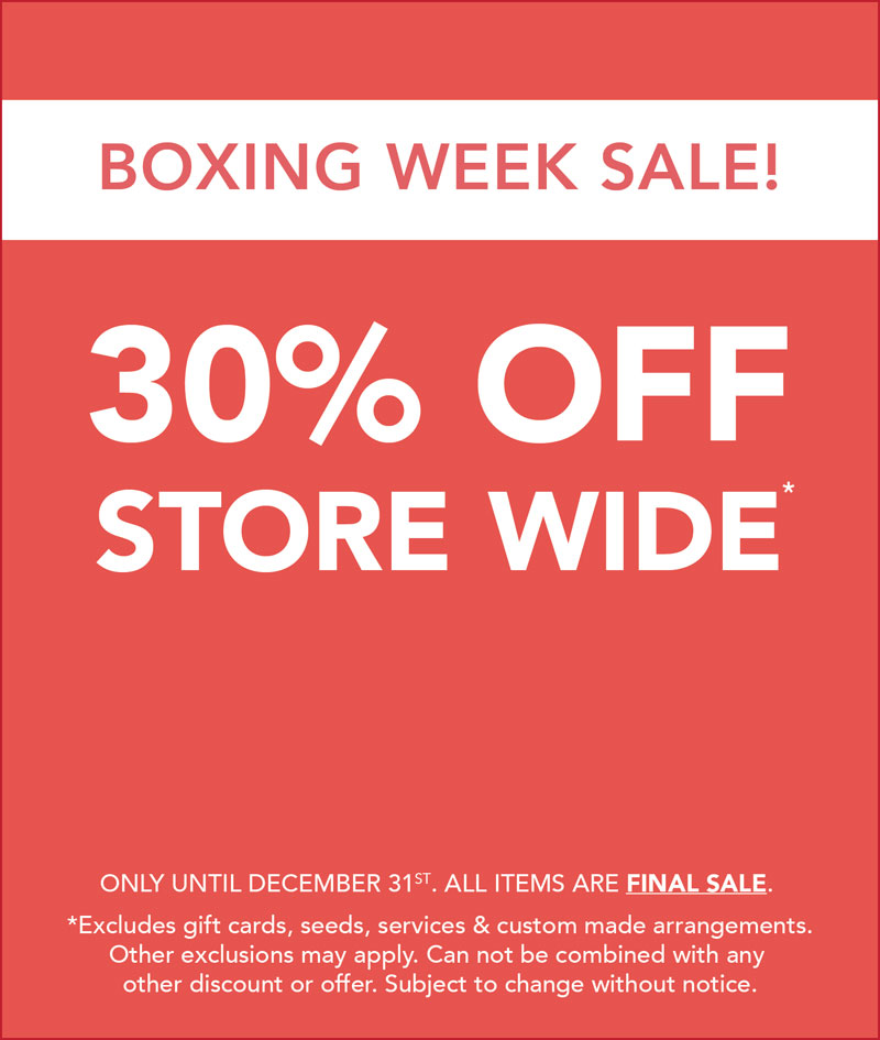 2018 Hole's Boxing Week Sale.jpg
