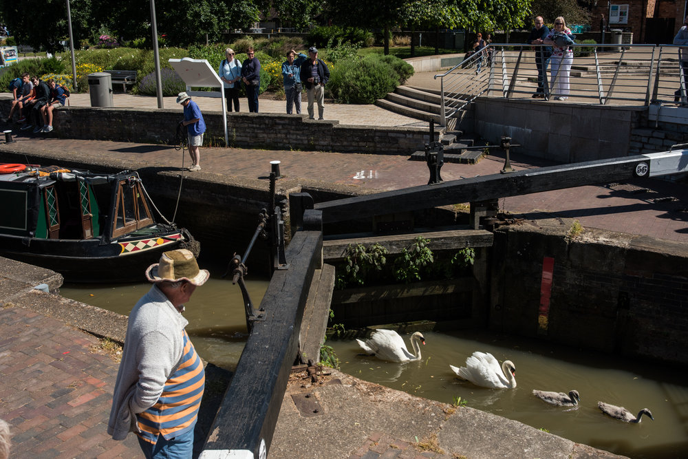 Swan family uses main canal basin lock to the river as a lift