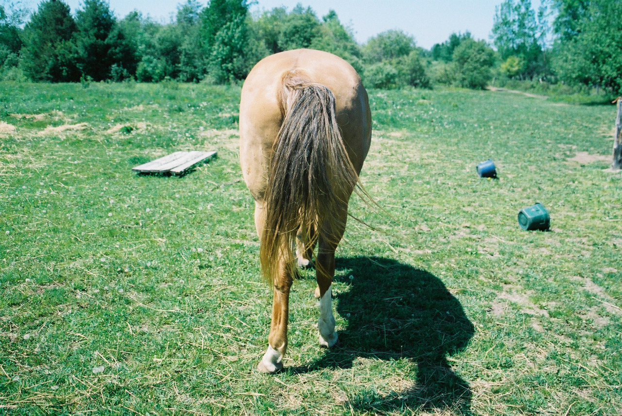 horse butt!