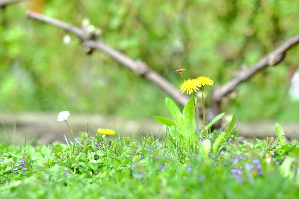 Blumen mit Biene im Garten