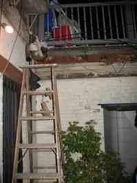 hangingcat.jpg