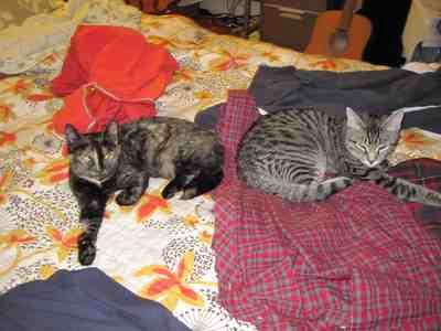 bedcats.jpg