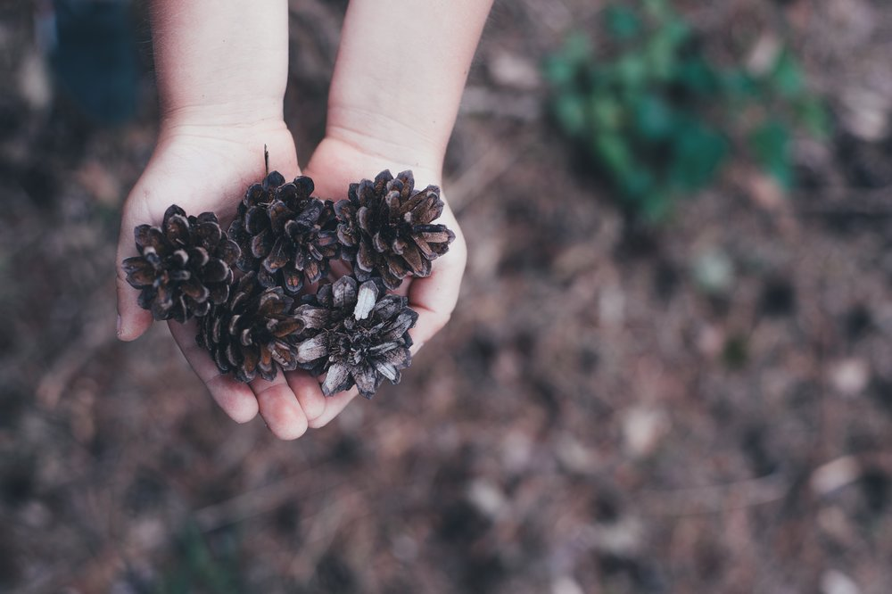 child holding pinecones