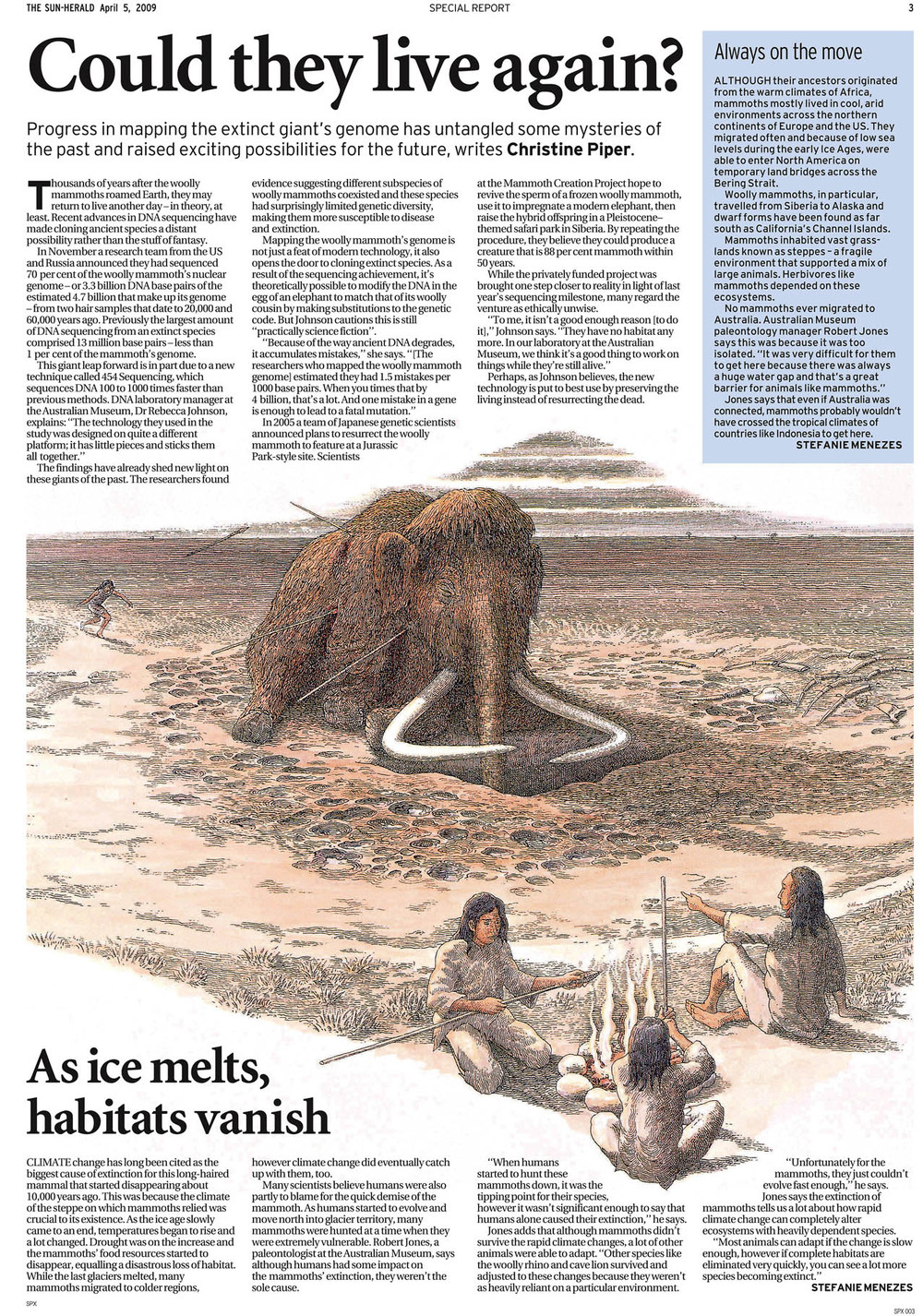 05_SunHerald_WoollyMammoth205APR09_MR.jpg