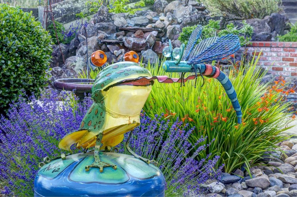 xx Frog Guy-1web.jpg -1.jpg