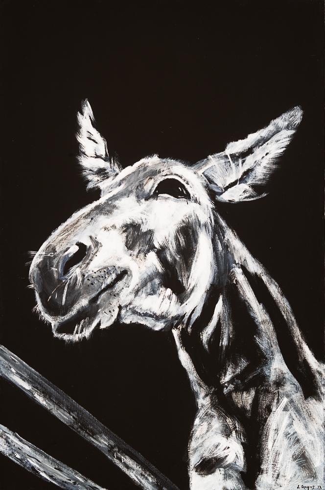 Donkey 3