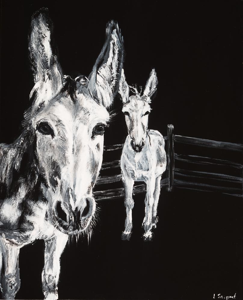 Donkeys 10