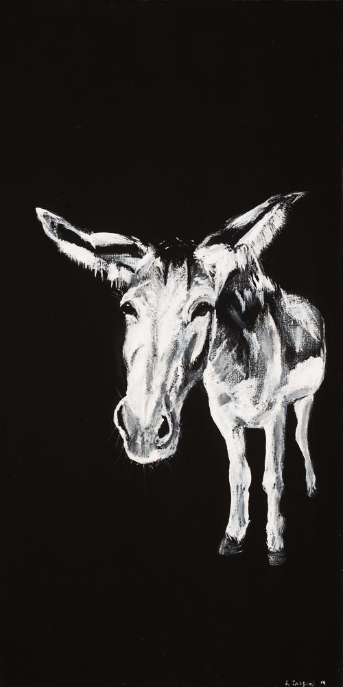 Donkey 11