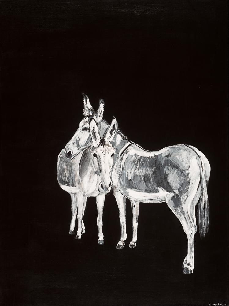 Donkeys 22