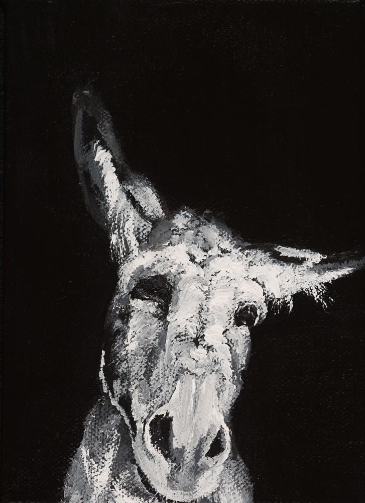 Donkey 17
