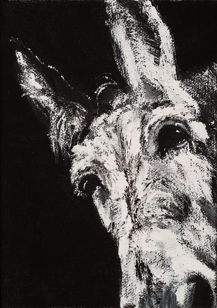 Donkey 19