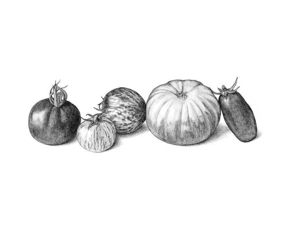 ss.tomatoes.jpg