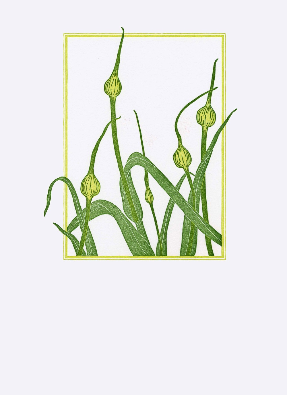Garlic Stalks