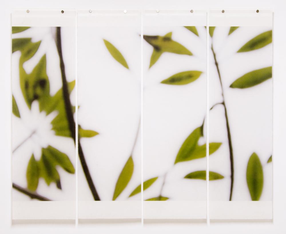 Winter Plumeria, No.5