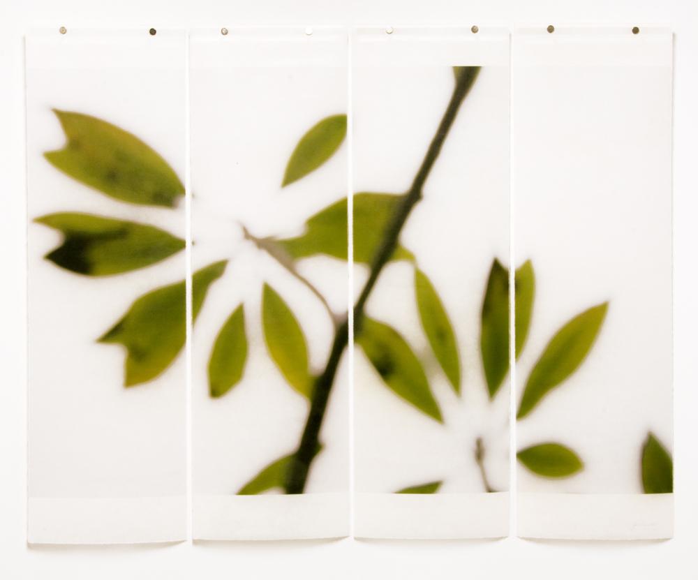 Winter Plumeria, No.7