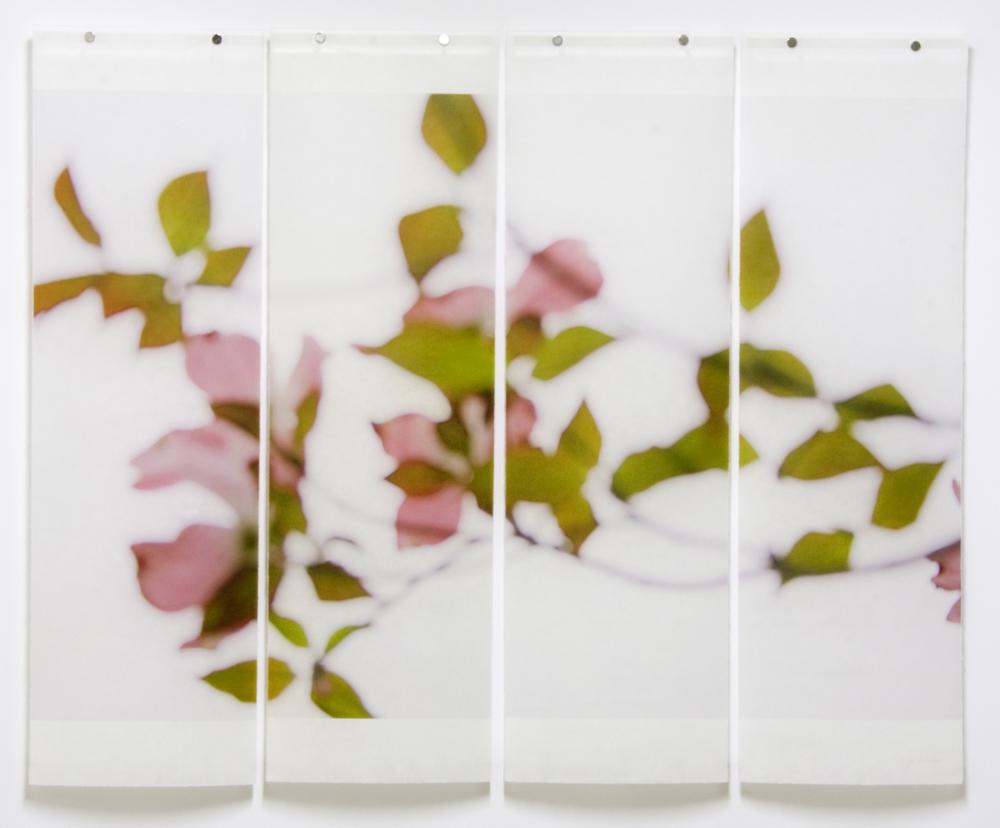 Dogwood (Pink)