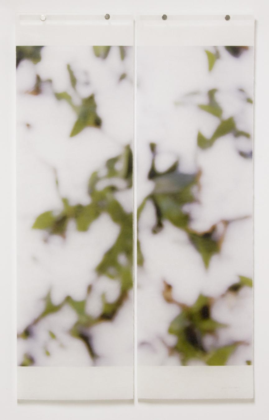 First Snow (Myrtle)