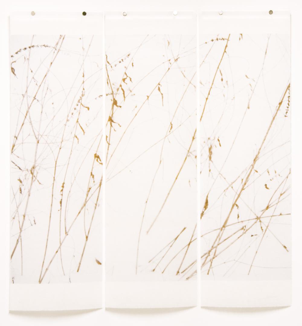 Winter Grasses (Tangle)