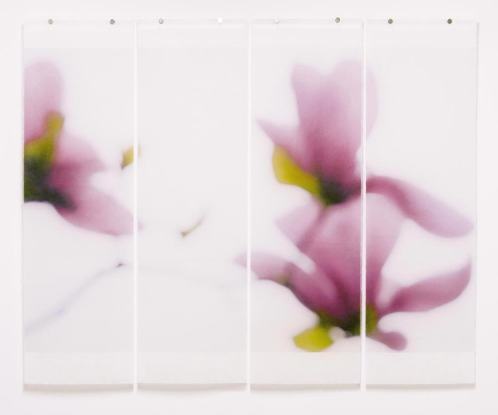 Magnolia, No.9