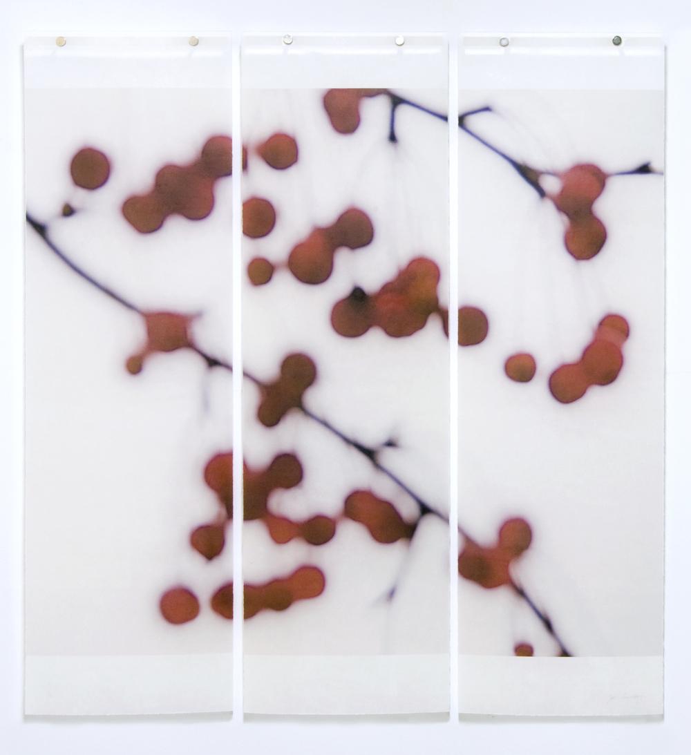 Winter Berries, No.3