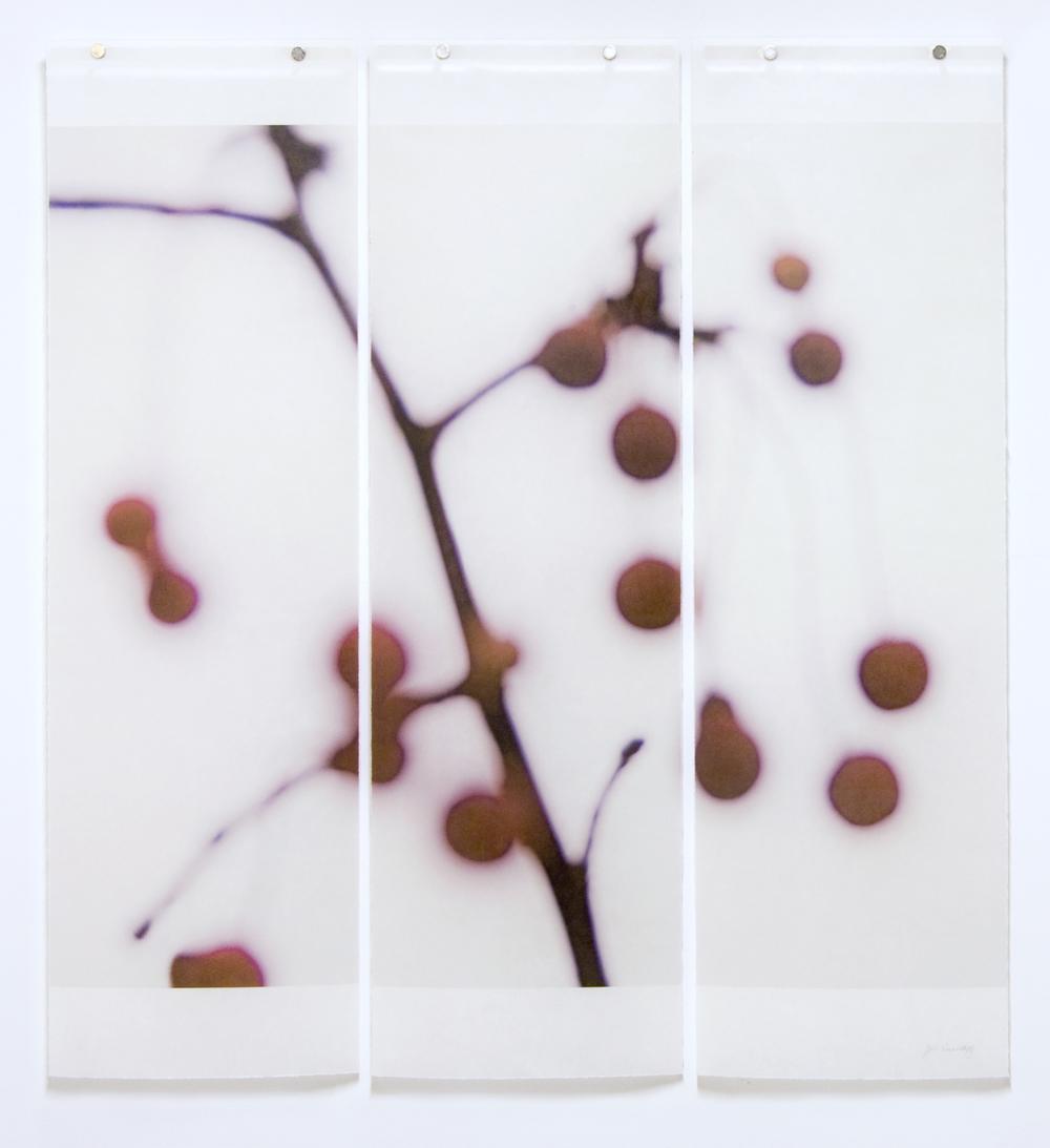 Winter Berries, No.6