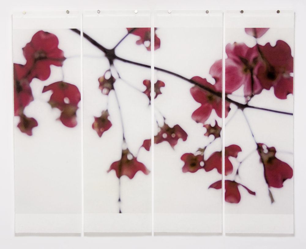 "Dogwood (Red), 36"" x 45.5"", pigment ink on Kozo with encaustic"