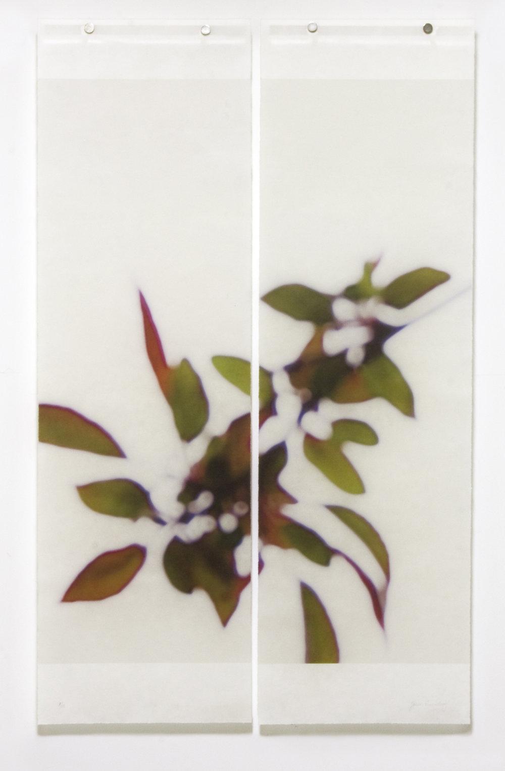 Crabapple Confetti