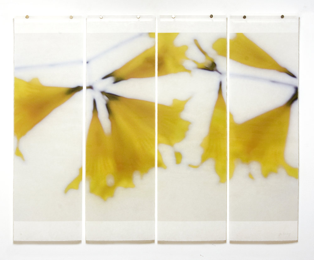"Golden Trumpets, No.6, 36"" x 45.5"", pigment ink on Kozo with encaustic"