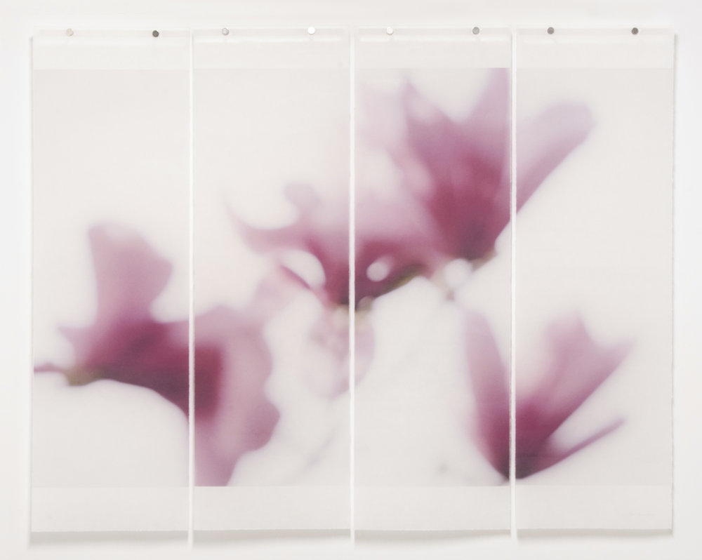 "Magnolia, No.12, 36"" x 45.5"", pigment ink on Japanese Kozo with encaustic medium"