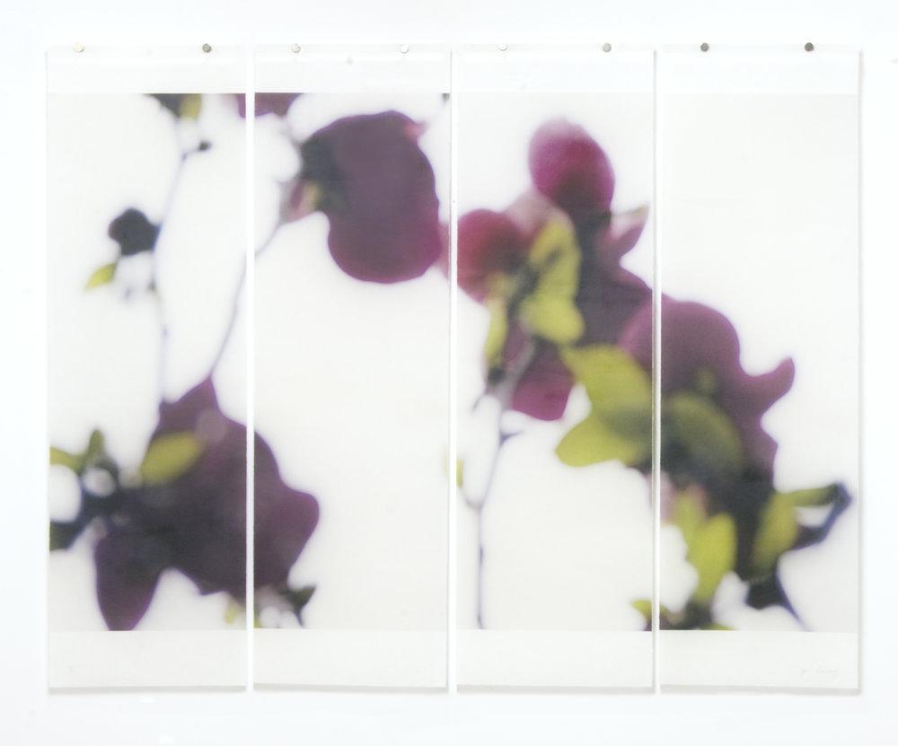 Dark Magnolia, No.2