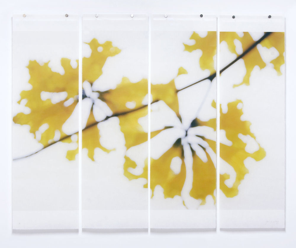 "Golden Trumpets, 36"" x 45.5"", pigment ink on Japanese Kozo with encaustic medium"