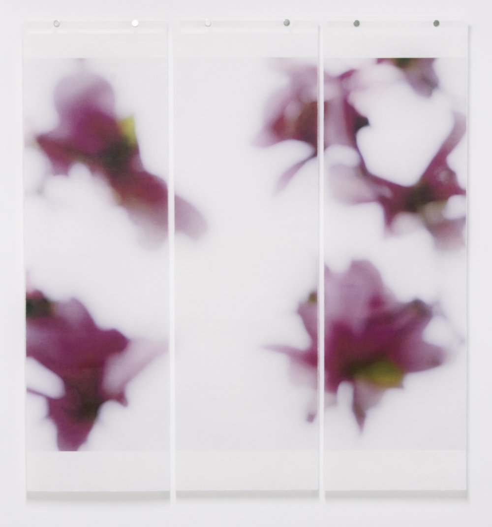 "Magnolia, No.13,  36"" x 34"", pigment ink on Japanese Kozo with encaustic medium"