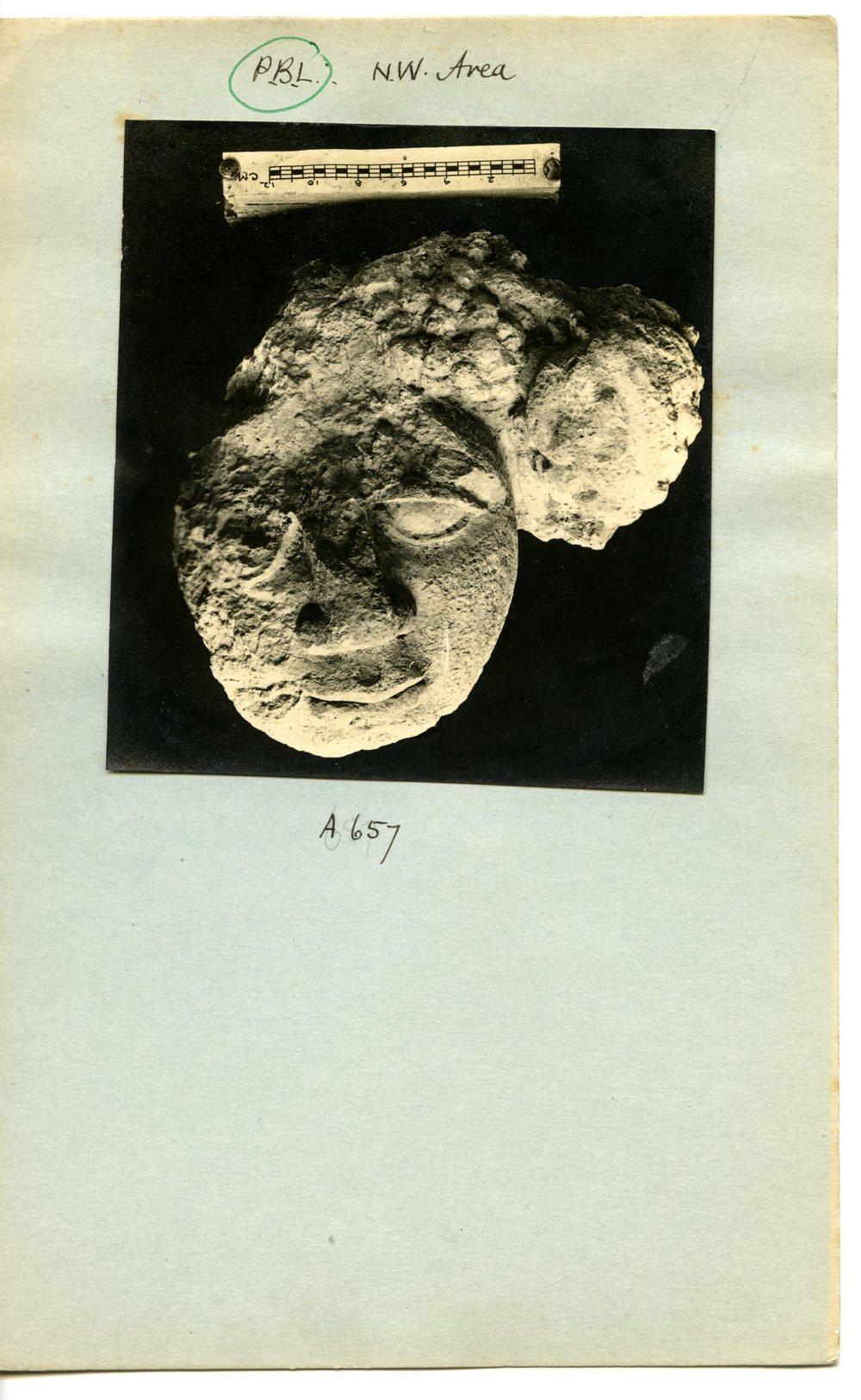 Field Photograph