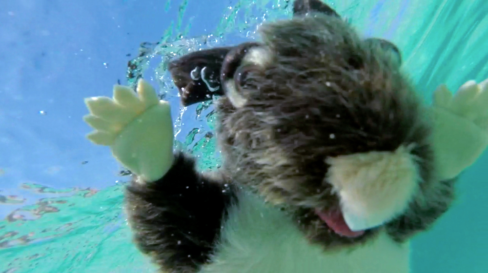 Pack Rat - underwater - looking down at camera.jpg