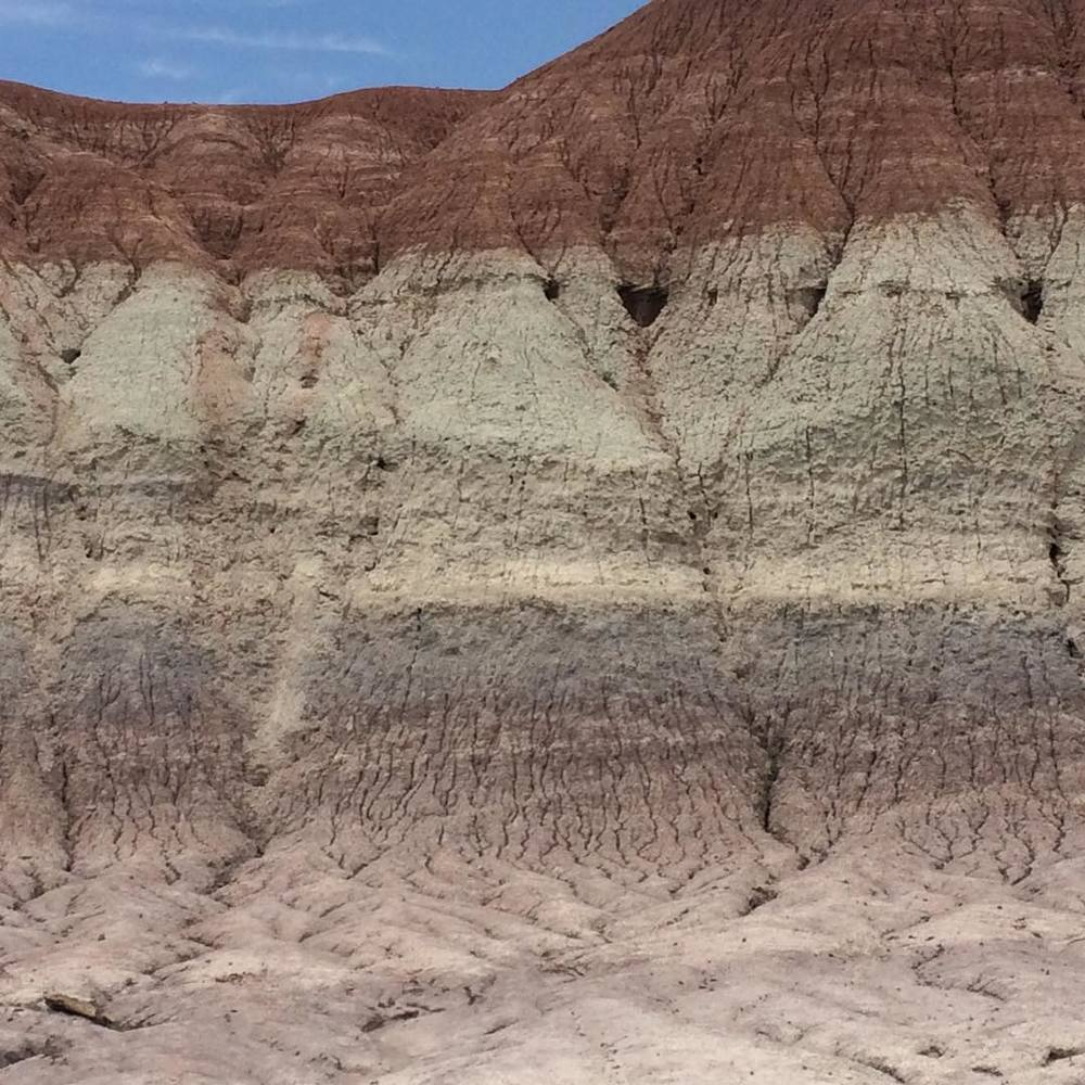 petrified stripes #paintedrock #petrifiedforest #arizona