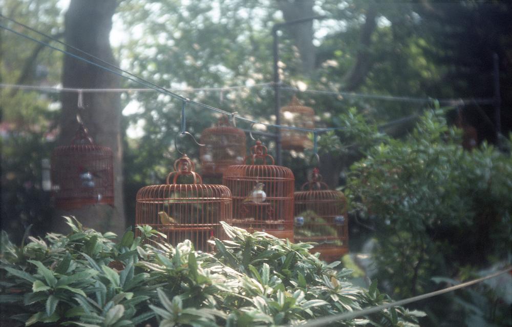 Hua Mei Bird Garden, NYC