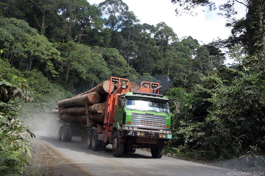 palm oil2.jpg