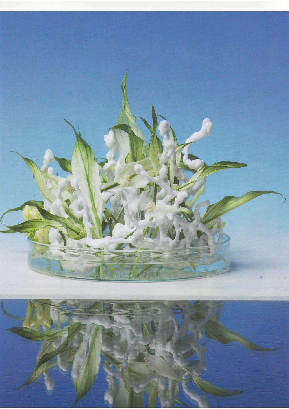 журнал цветы 01.2011-06.JPG