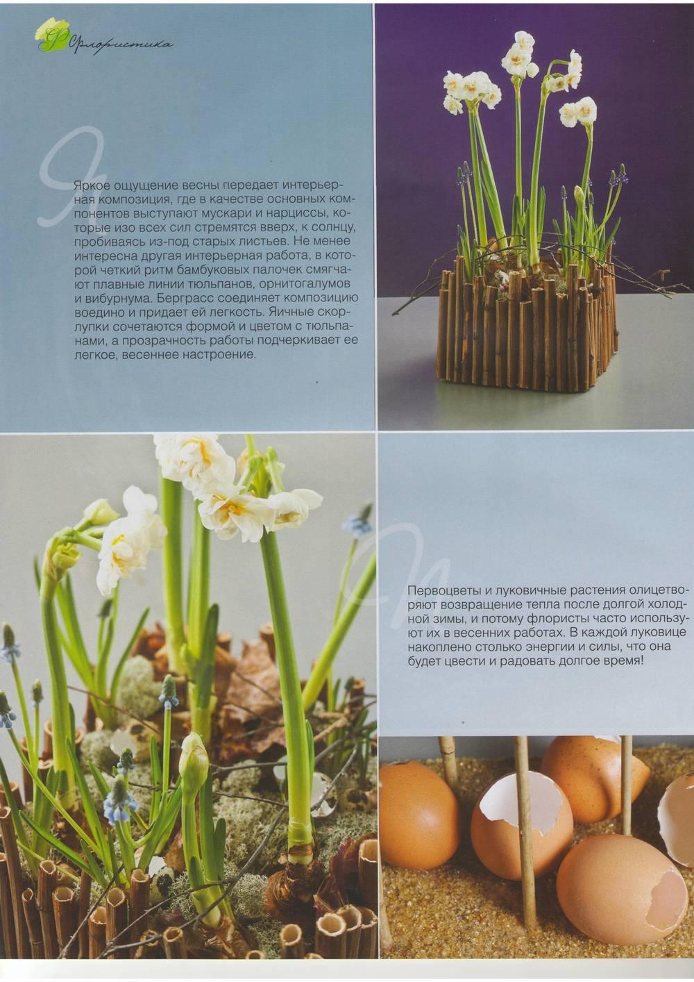 Цветы 04 2011-03.JPG