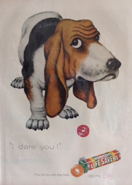 Don't give sweets to Basset Hounds
