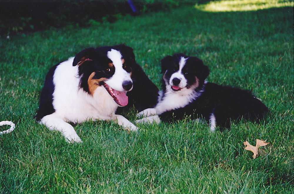 rhody-puppy-skye.jpg