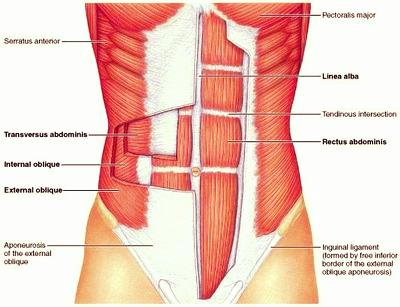 abdominals.jpg