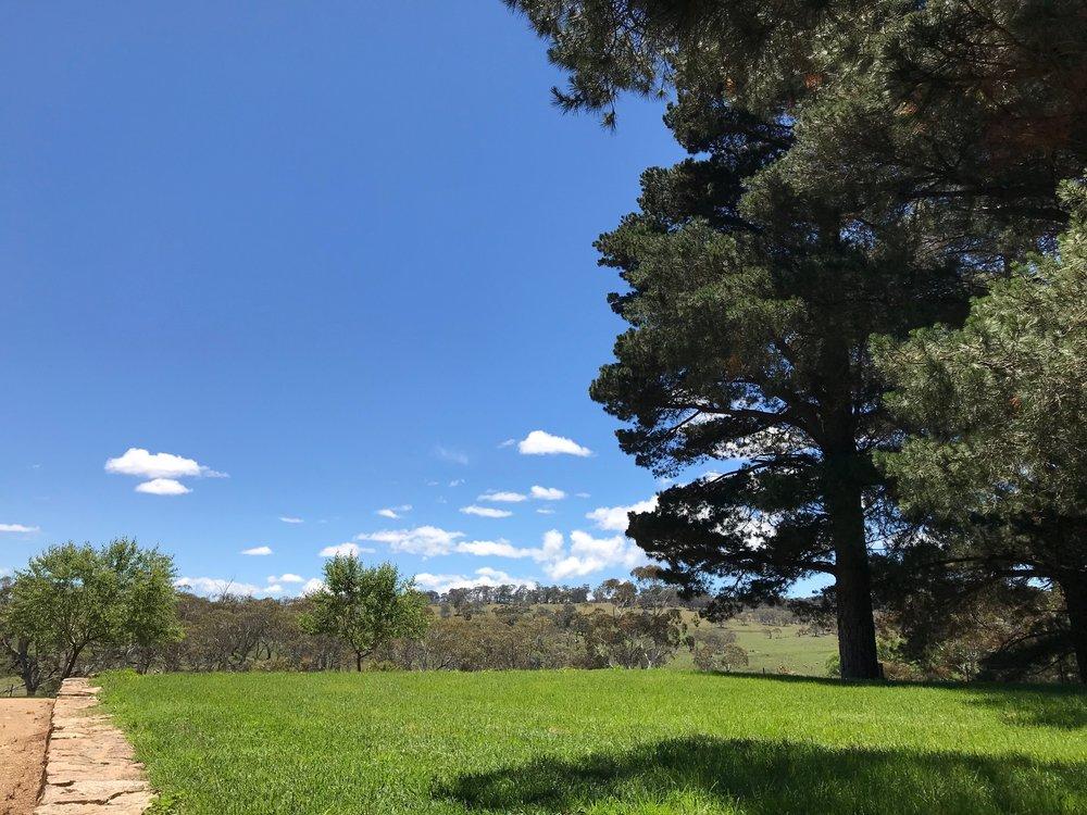 top lawn.jpg
