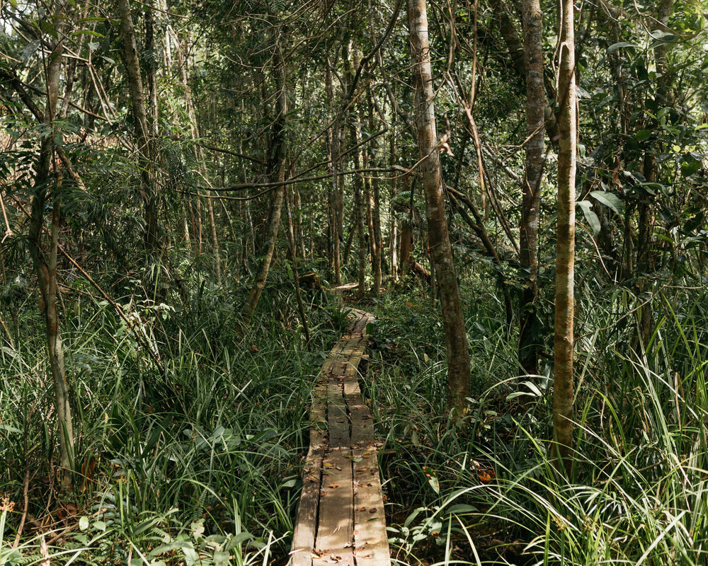 A wooden walkway installed by PT Rimba Makmur Utama in the forest at Hantipan. This walkway, which is useful for observation and firefighting missions, so far already extends for three kilometers.