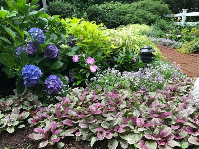 A colorful, and hardy planting to spruce up a shady front walkway to the entrance.