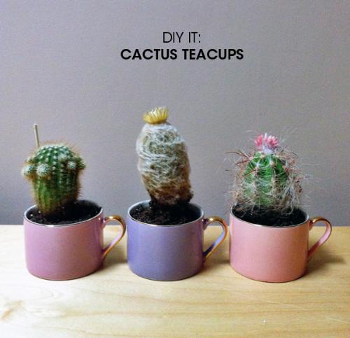 Cactus Teacups DIY