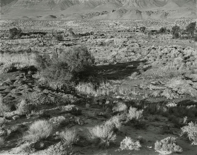 03-Richard Boutwell_Lower Owens River Project_10.jpeg
