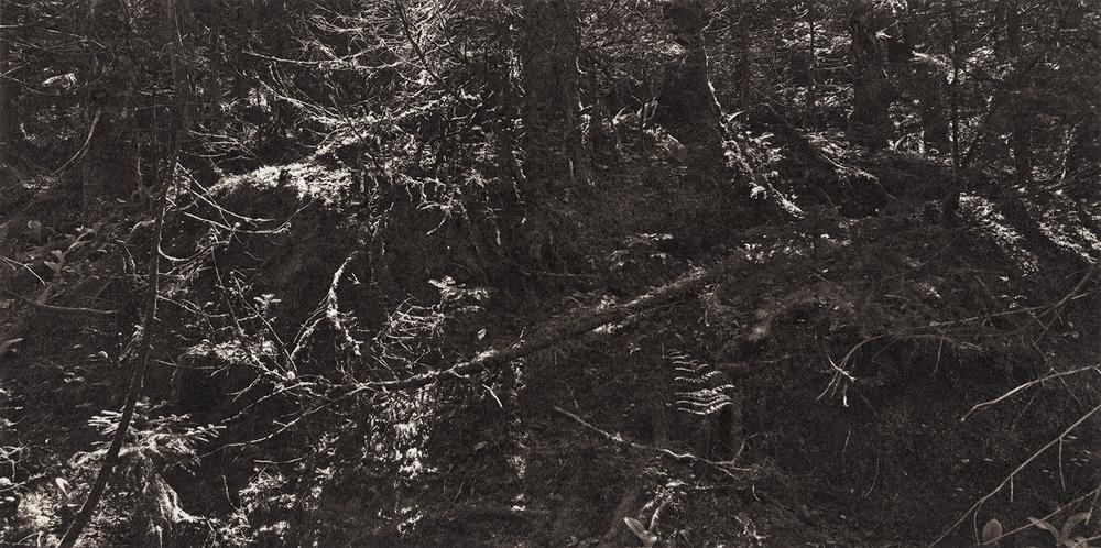 Ambler|Meditations-vermont-dark-pines.jpg